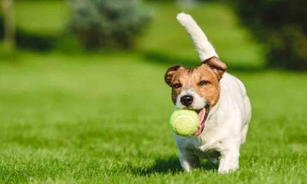 Should you let your dog play with tennis balls?