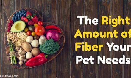 Fiber your pet needs, and the fancy fibers to avoid