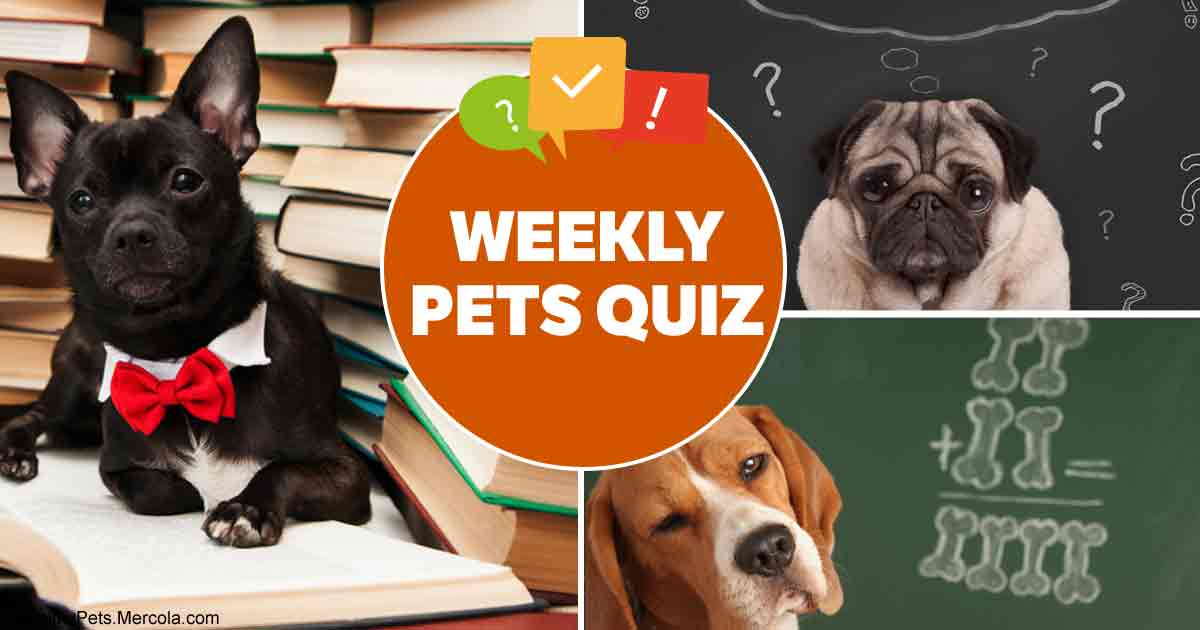 Weekly pet quiz: Dog food, cat-friendly plants and empathy