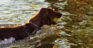Nationwide Alert: Vets Warning about Toxic Algae Responsible for Dog Deaths