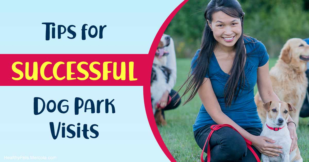 The truth about dog parks and why many dogs dislike them