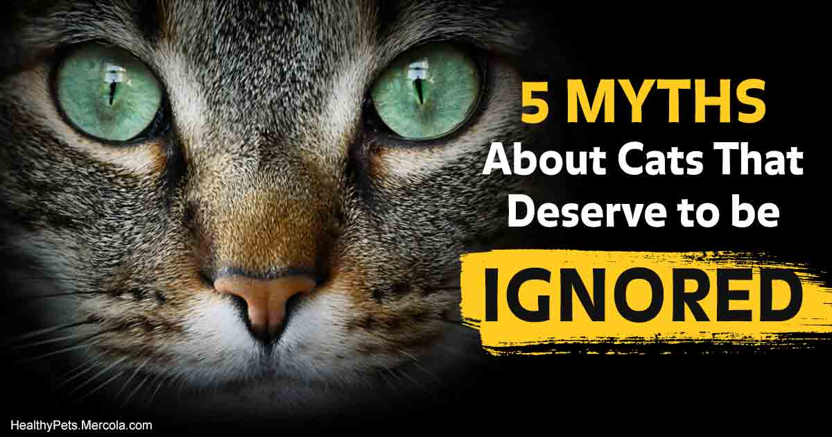 Which of these outdated kitty myths do you still believe?