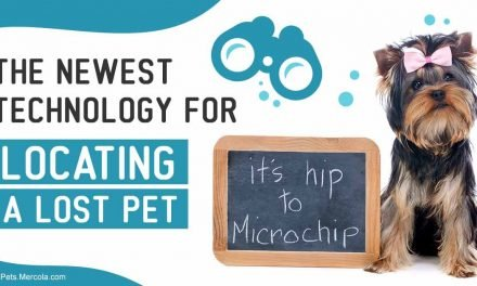 The newest technology for locating a lost pet