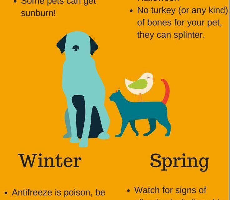This pet safety infographic will help you to easily visualize these pet safety tips for year round pet safety. Tips for Summer, Spring,