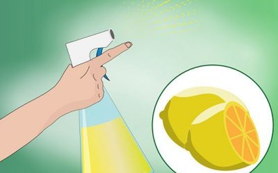 3 Ways to Make Homemade Cat Repellent – wikiHow – How to keep cats out of the garden safely