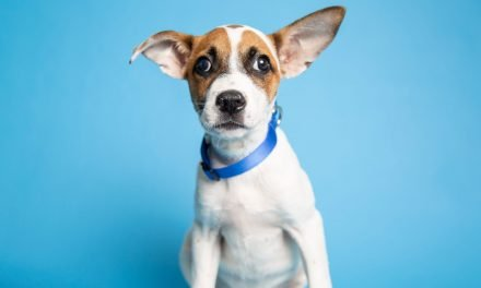 An adventurous dog and more up for adoption in Phoenix-area shelters this week