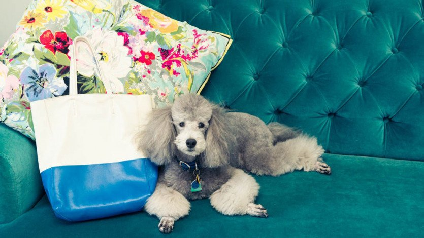 The Wellness Industry Is Coming for Your Pets