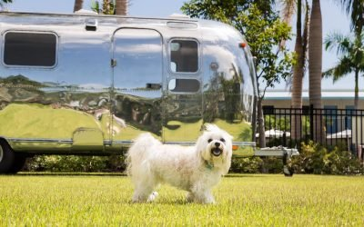 15 Most Dog-Friendly Hotels in America