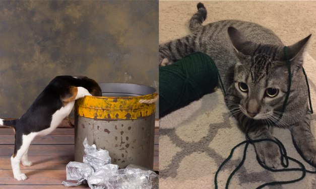 26 things you should get rid of when you have pets