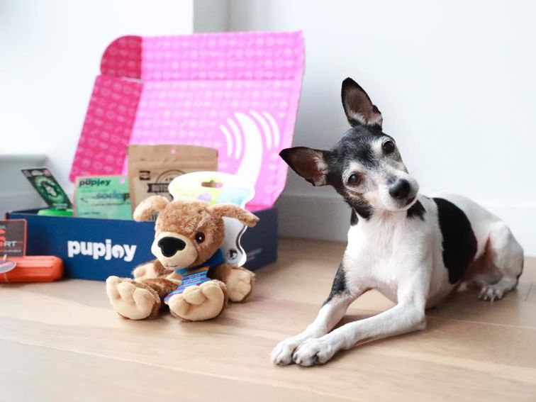 Best dog food delivery services: Pet Plate, NomNomNow and more – CNET