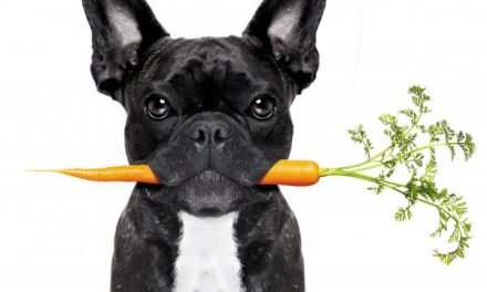 FIBER: A Friendly Food for your Dog's Health