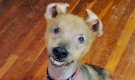 This Special Pup Was Born With A Permanent Smile
