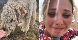 Tearful Reunion for Dog Missing After Tragic Crash in Colorado Rockies