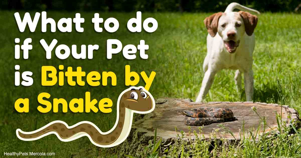 If a Snake Bites Your Pet, Never Do This