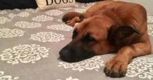Lost Dog's Bed Helps Him Find His Way Home