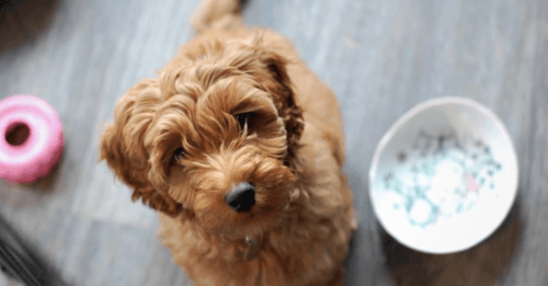 The Long Term Cost of Cheap Dog Food