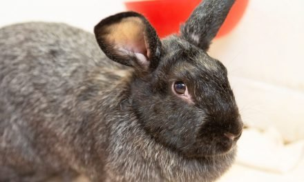 A rabbit that is the true definition of a survivor and more up for adoption in Phoenix-area shelters this week