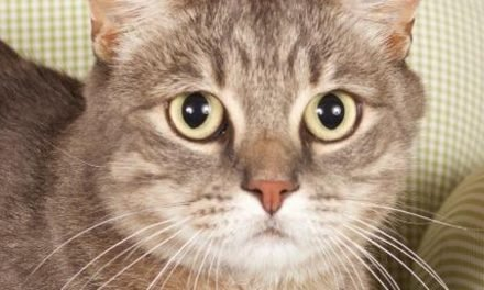 A fierce hunter and more up for adoption in Phoenix-area shelters this week