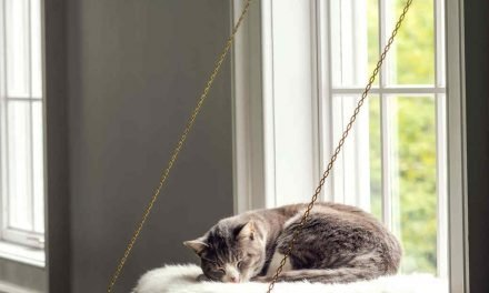 window ledge cat bed – diy instructions