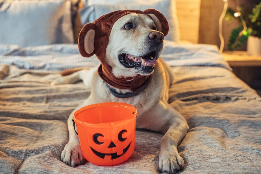 10 dog Halloween costumes that are totally Instagram-worthy