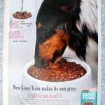 1962 Collie -Gravy Train Dog Food -Add Water Original 13.5 * 10.5 Magazine Ad-Pet Food