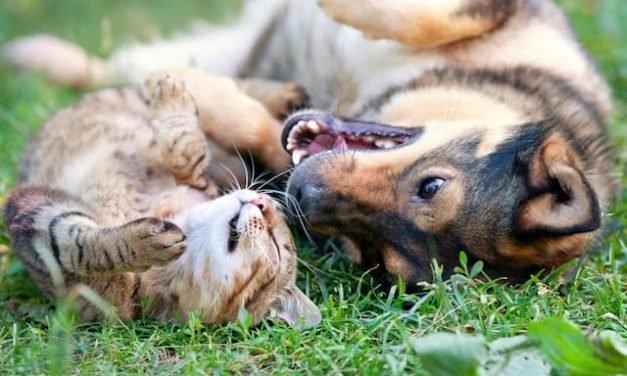 21 Surprisingly Simple Ways to Save Money on Pet Care