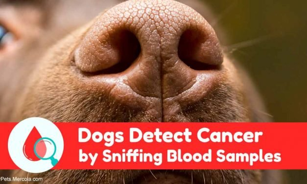 Can Dogs Really Detect Malignancy? This Study Proves It