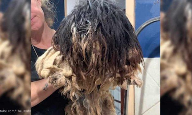 Shaggy Dog Gets a Makeover