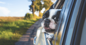 "Get Paid To Travel With Your Pup And Post To Social Media. Snaptrip Seeks ""Furrfluencers""!"
