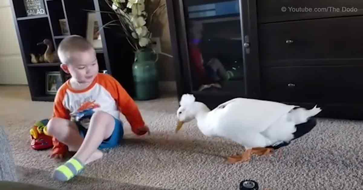A Duck and His Boy