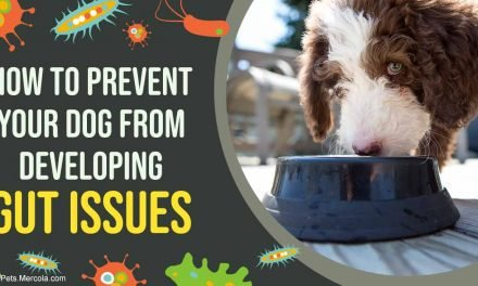 Gut Issues? Many Vets Miss the Mark for Effective Treatment