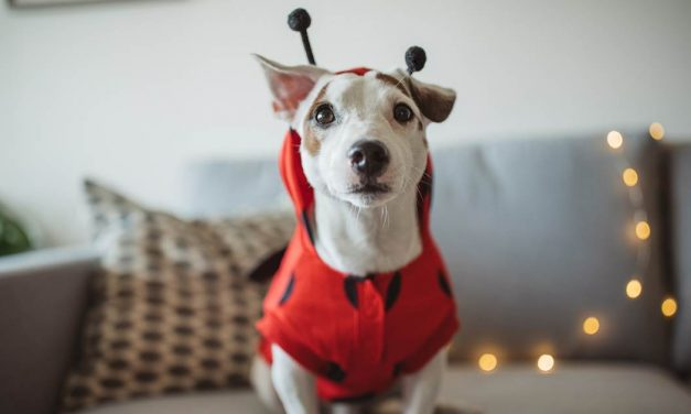 6 tips that every pet parent should know on Halloween