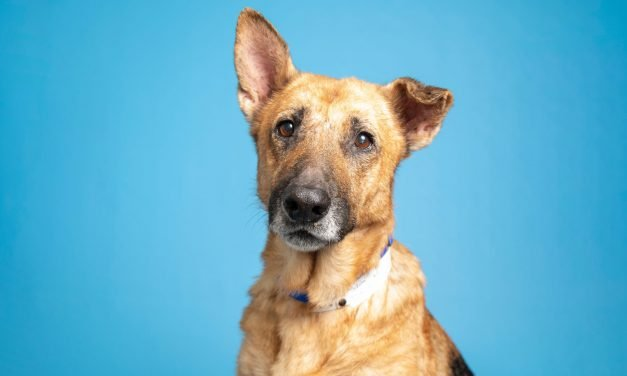 A dog with the perfect mix of gentle and calm and more up for adoption in Valley shelters