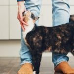 Ten Things You Need Before Adopting a Cat