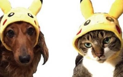 Pokemon Releases Adorable New Pet Clothing Collection