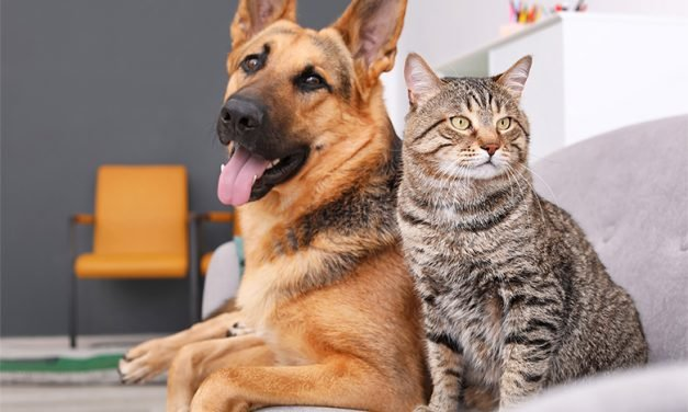 Make your home more comfortable for you and your pets