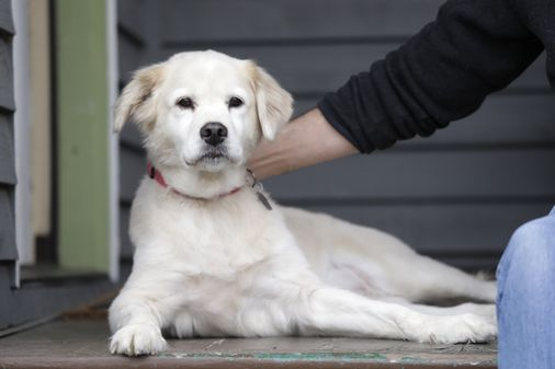 Researchers have finally put a price tag on the life of a dog