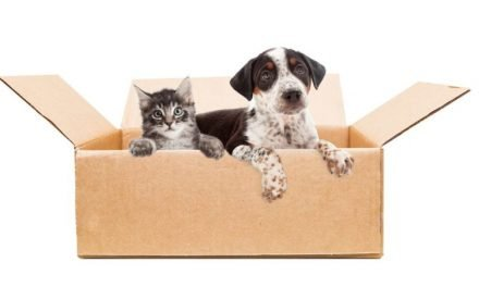 Tips for Moving with Dogs and Cats