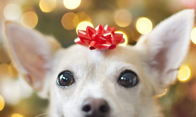The Most Ridiculous Gifts We've Given Our Pets