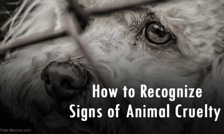 How to Recognize Signs of Animal Cruelty