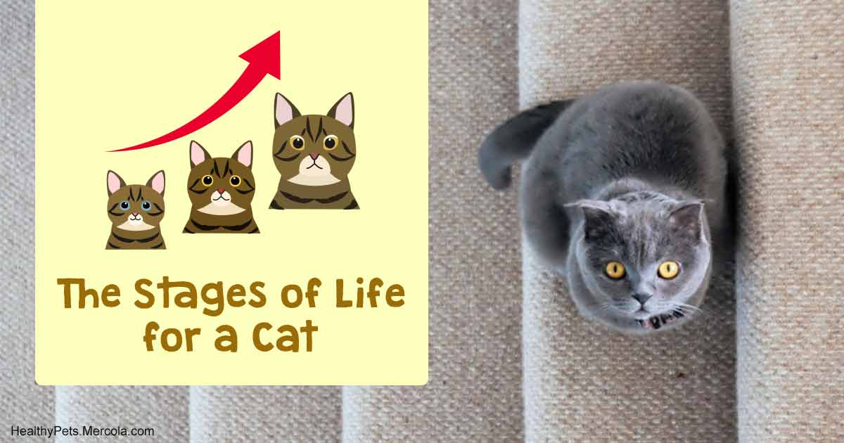 The Mysterious Feline Life Stages: When Is a Kitten a Cat?