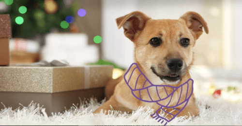 How To Celebrate Your Dog This Holiday Season