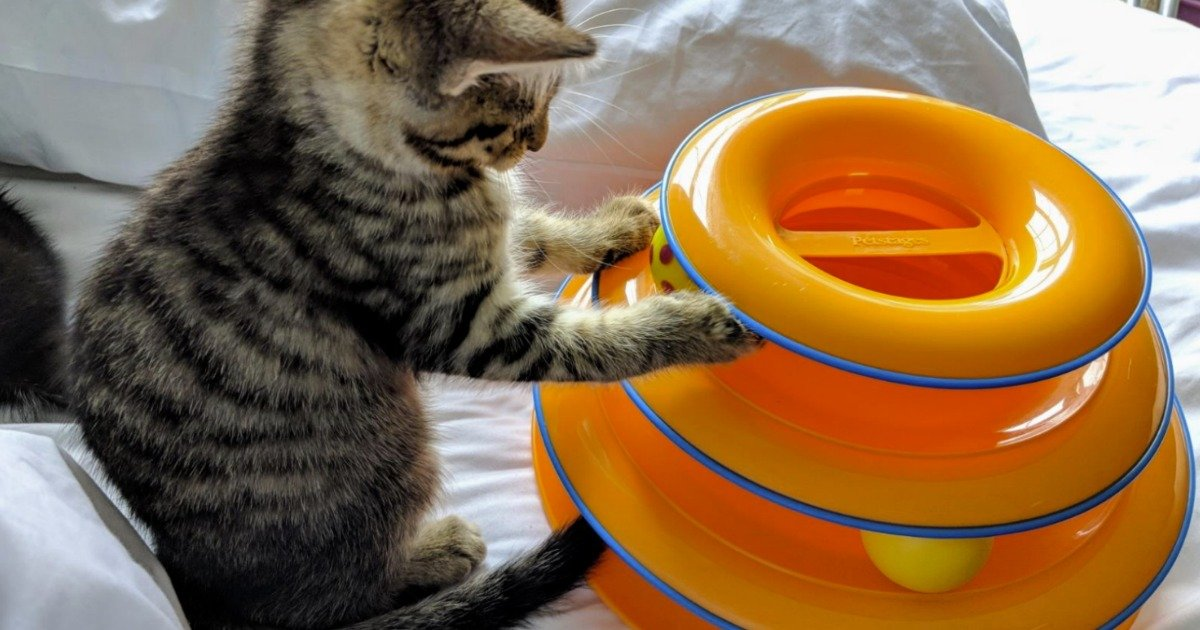 Up to 80% Off Dog & Cat Toys at Chewy.com