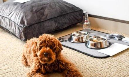 The Best Pet-Friendly Hotels In Philadelphia