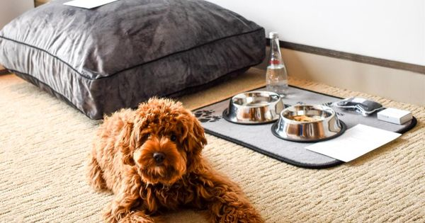 The Best Pet-Friendly Hotels In Philadelphia