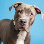 Nala and more pets up for adoption in Phoenix-area shelters this week
