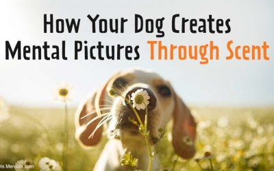 How Your Dog Creates Mental Pictures Through Scent