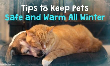 Cold Weather Can Kill Your Pet — Follow These Tips