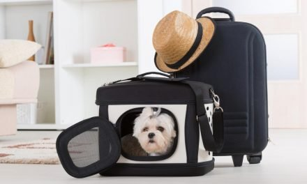 Make pet travel a breeze with these 15 Amazon essentials