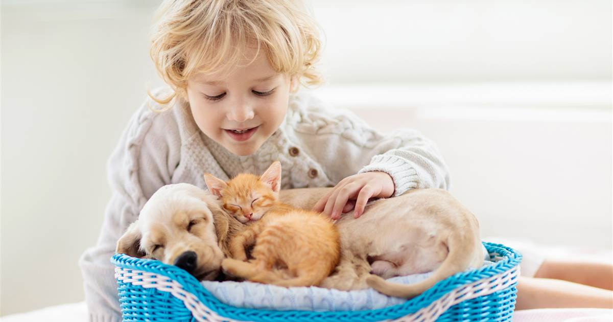 Show your pet some love with these top products